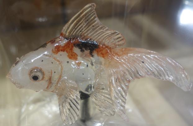 アメシン鯉