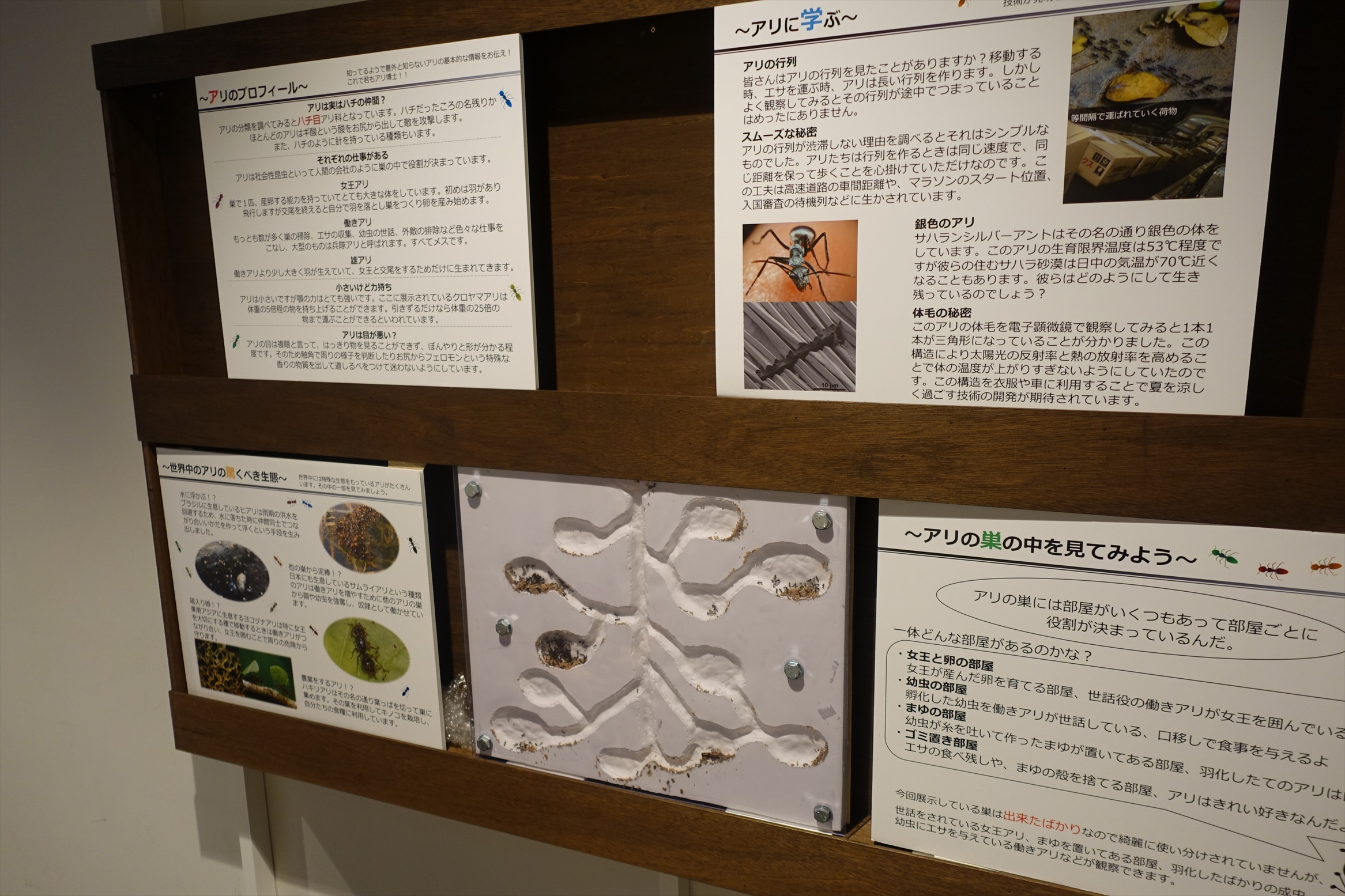 大昆虫展inスカイツリータウンソラマチ012