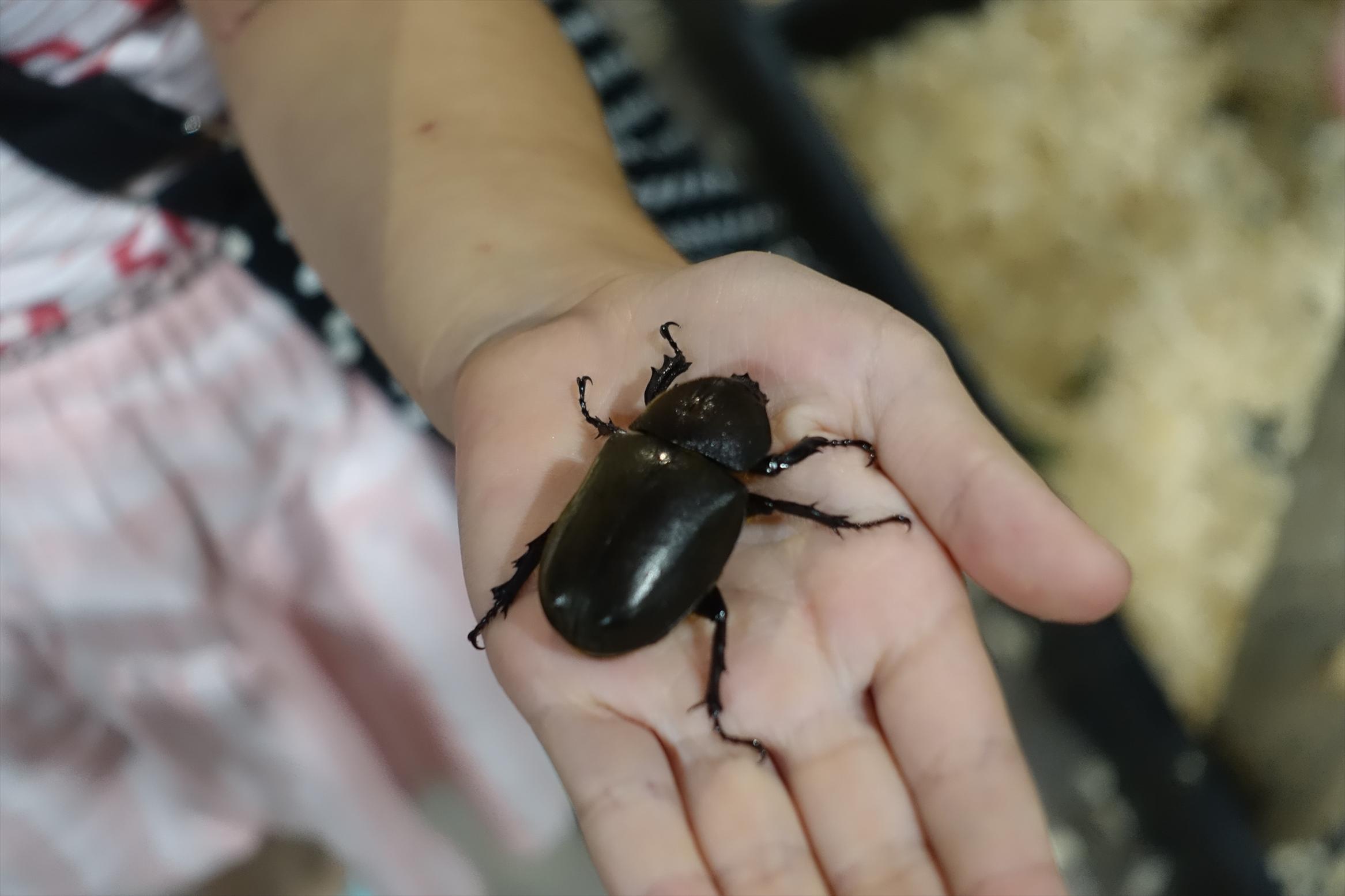 大昆虫展inスカイツリータウンソラマチ110