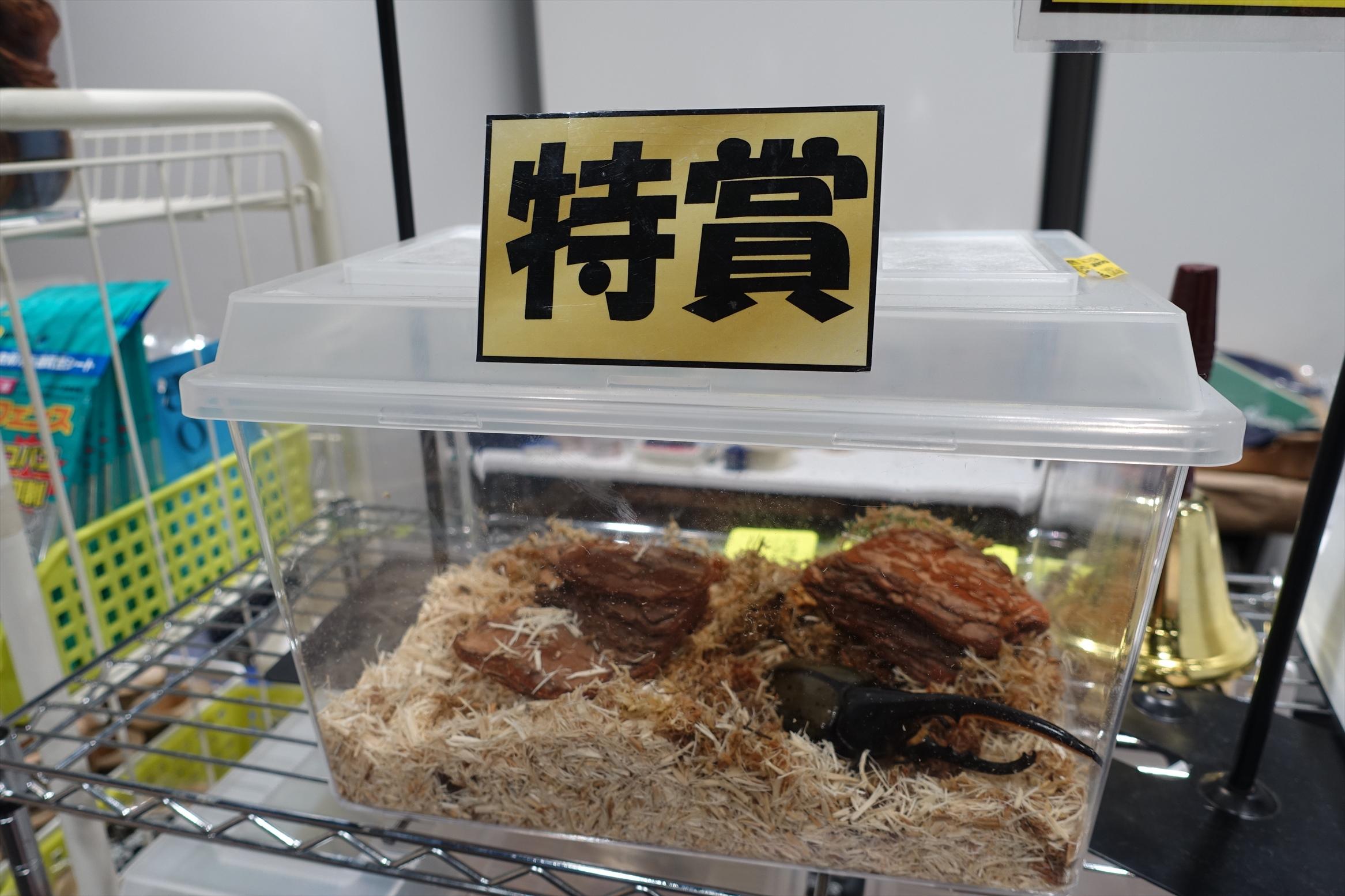大昆虫展inスカイツリータウンソラマチ068