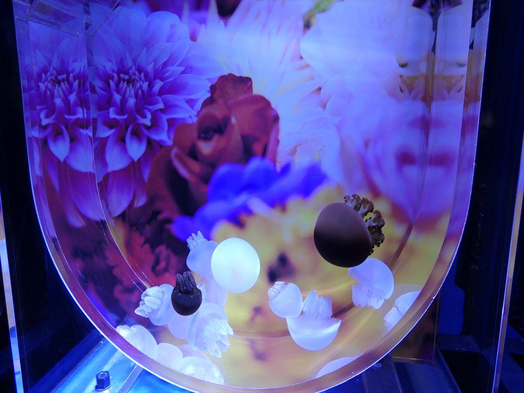 蜷川実花×クラゲ018