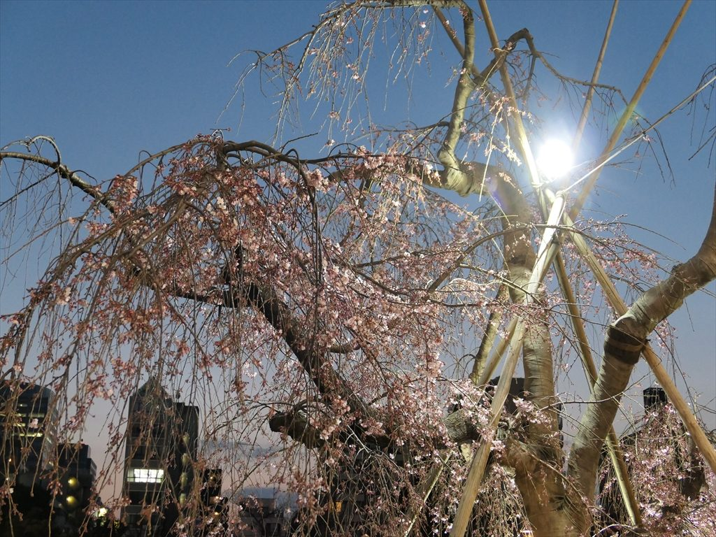 錦糸公園桜20170325007_R