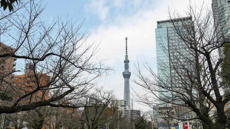 墨田区 錦糸公園 桜 2019