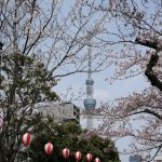 錦糸公園桜20170402001_R