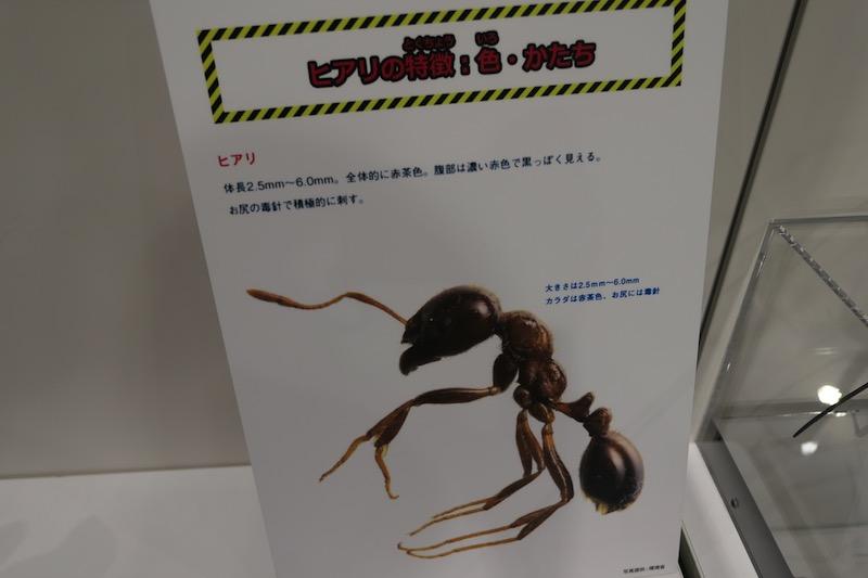 大昆虫展in東京スカイツリータウン2017g