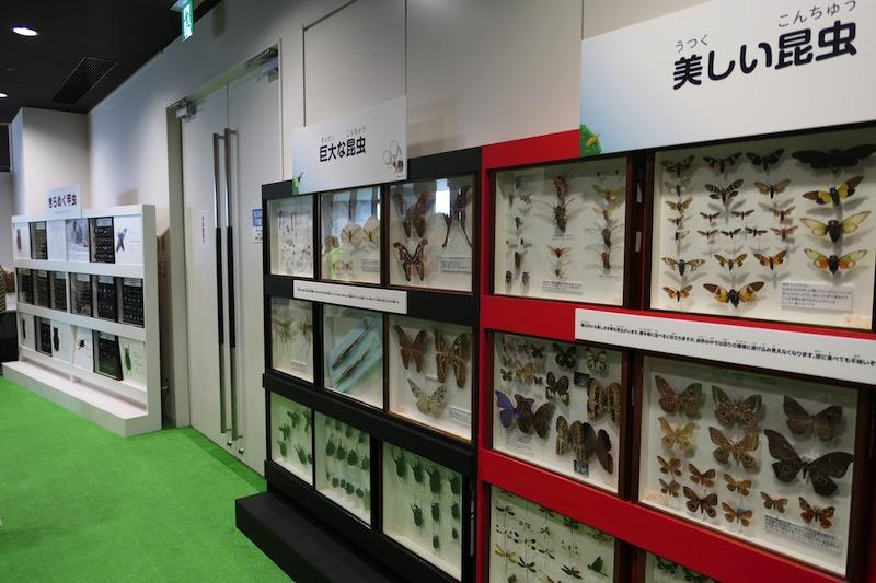 大昆虫展in東京スカイツリータウン2017j