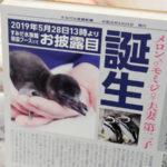 すみだ水族館 ペンギンの赤ちゃん
