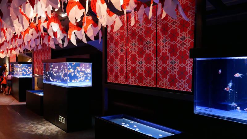 すみだ水族館 東京金魚ワンダーランド2018