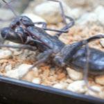 蟲のキモアニゾーン