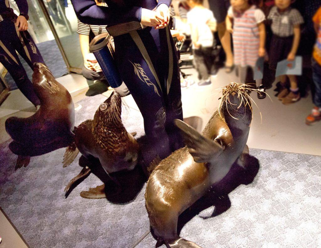 ハロウィン in すみだ水族館 ハロウィンオットセイパレード