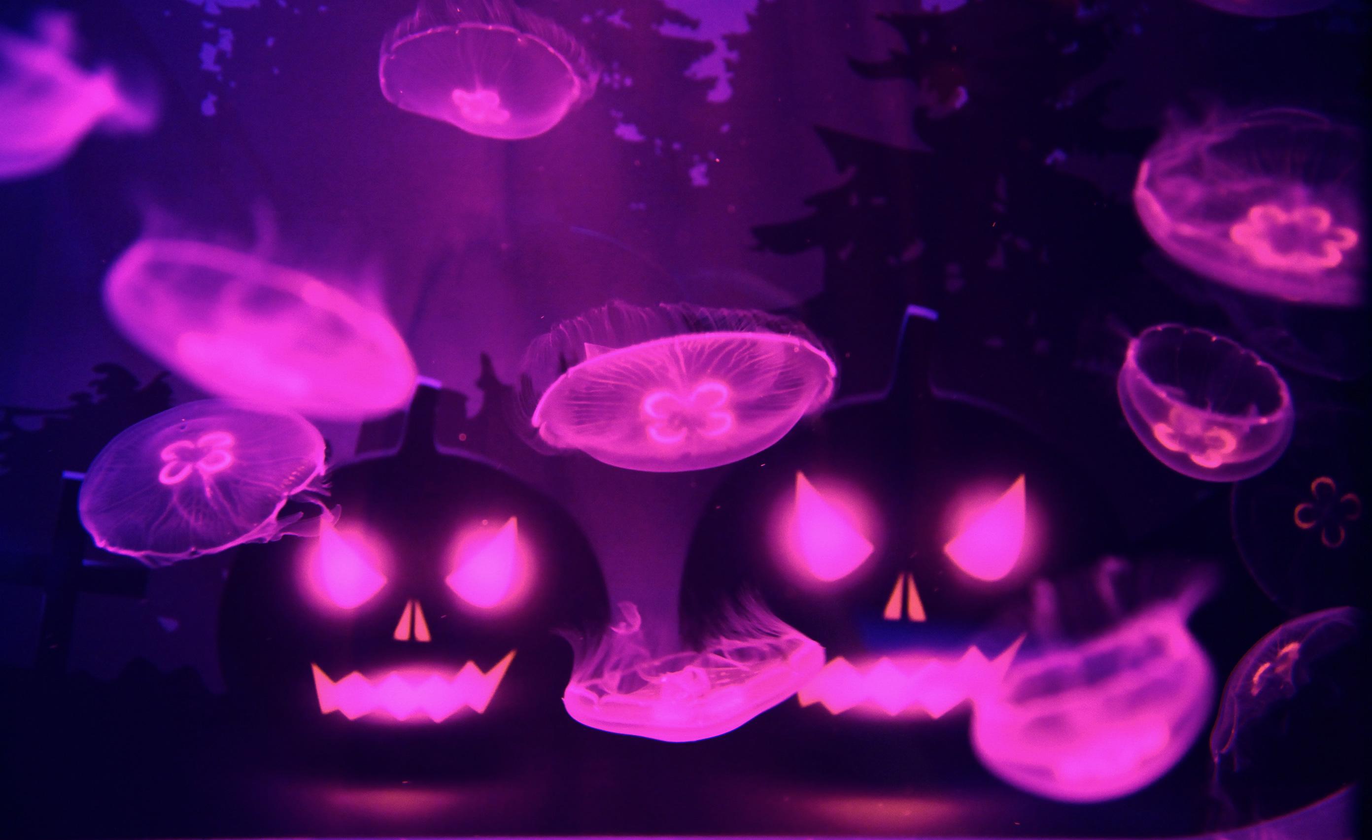 ハロウィン in すみだ水族館 クラゲとハロウィン