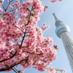 スカイツリー 河津桜 2020